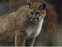 Mountain Lion Hunting Guides and Outfitters from North Dakota
