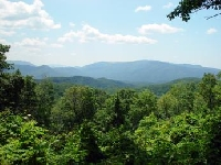 Tennessee Hunting Land for Sale and Land for Lease in Tennessee