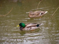 Wisconsin Duck Hunting Guides